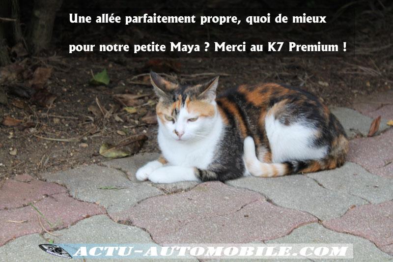 Petit'Maya